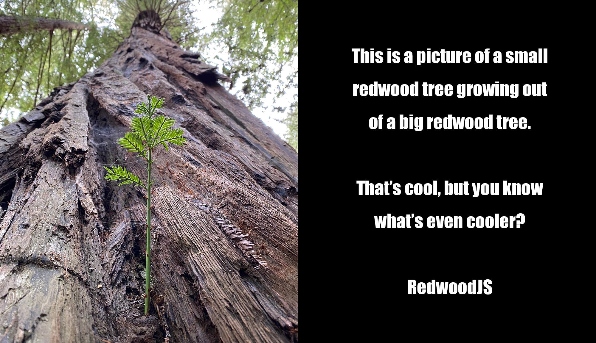 RedwoodJS