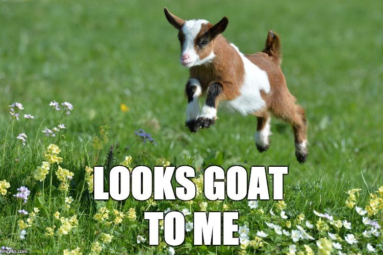 lgtm_goat