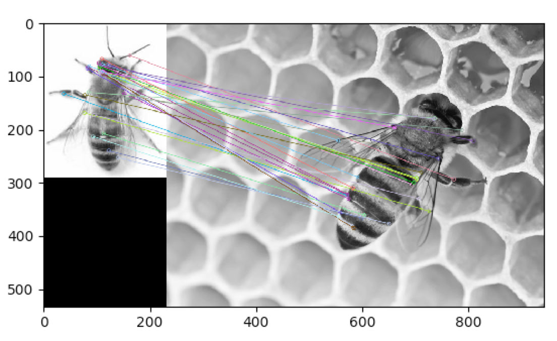 Bee compared to bee example
