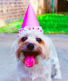 Happy puppy image slack calendar