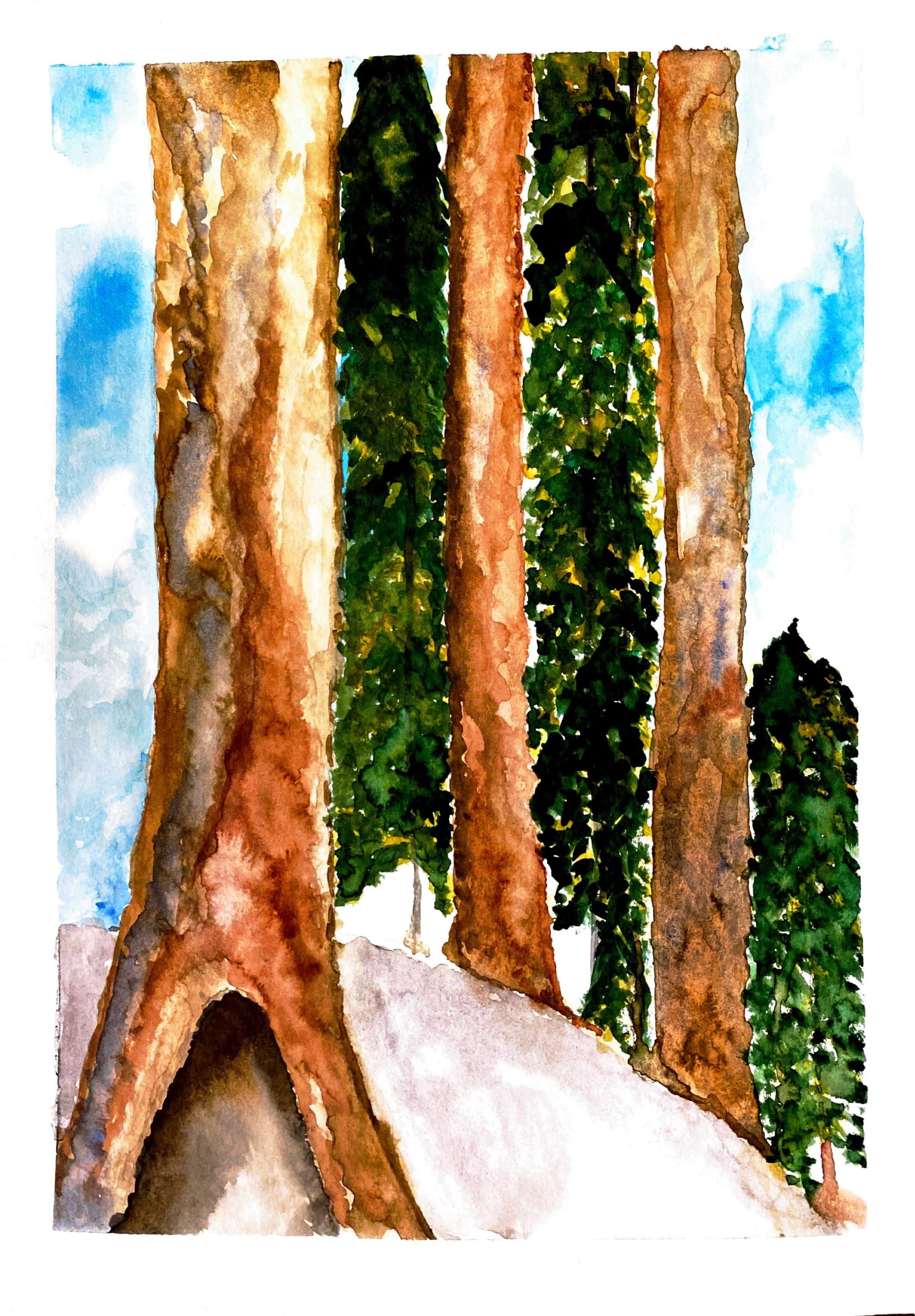 Aud's Redwoods