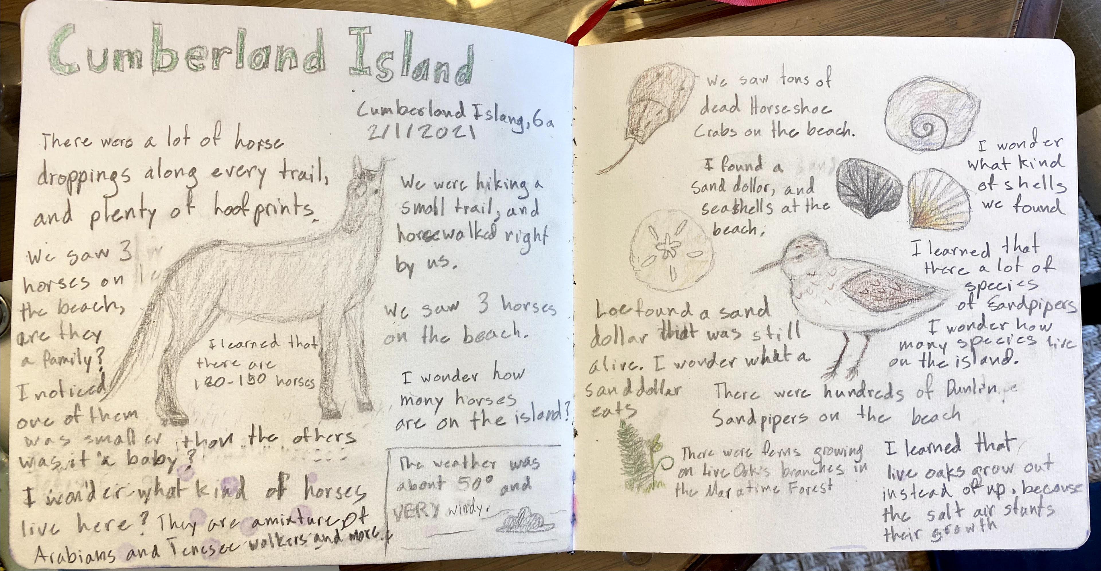 Aud's Cumberland Island NJ
