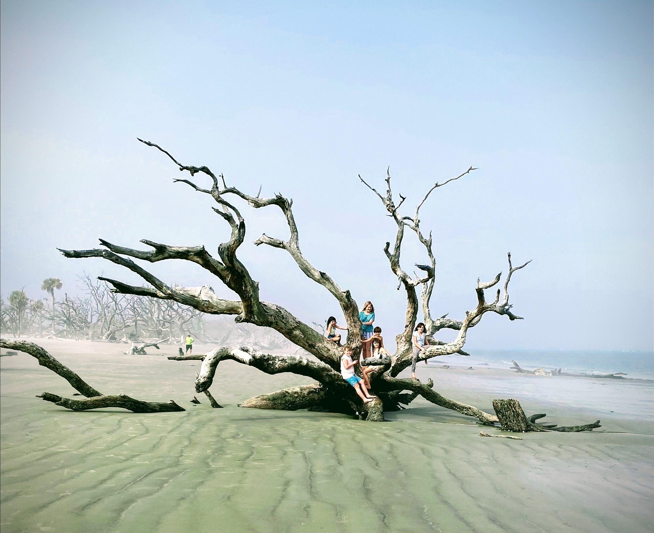 Idriftwood beach