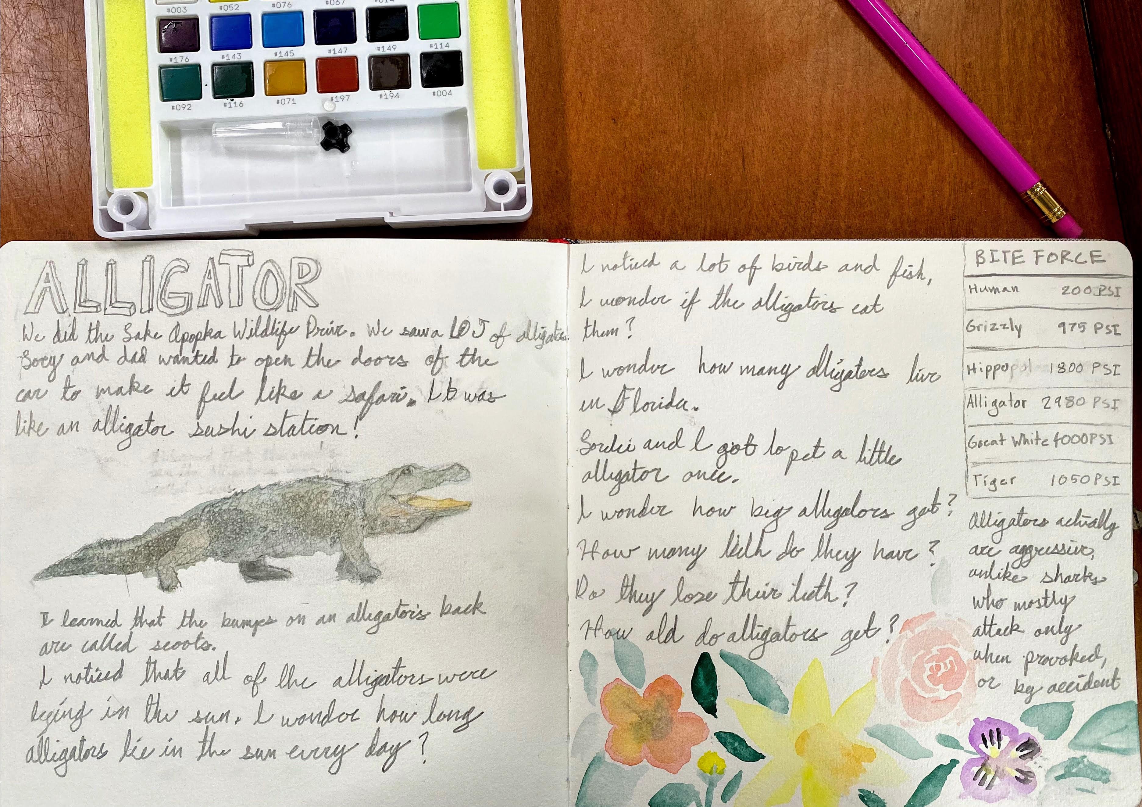 Alligator NJ Audrey