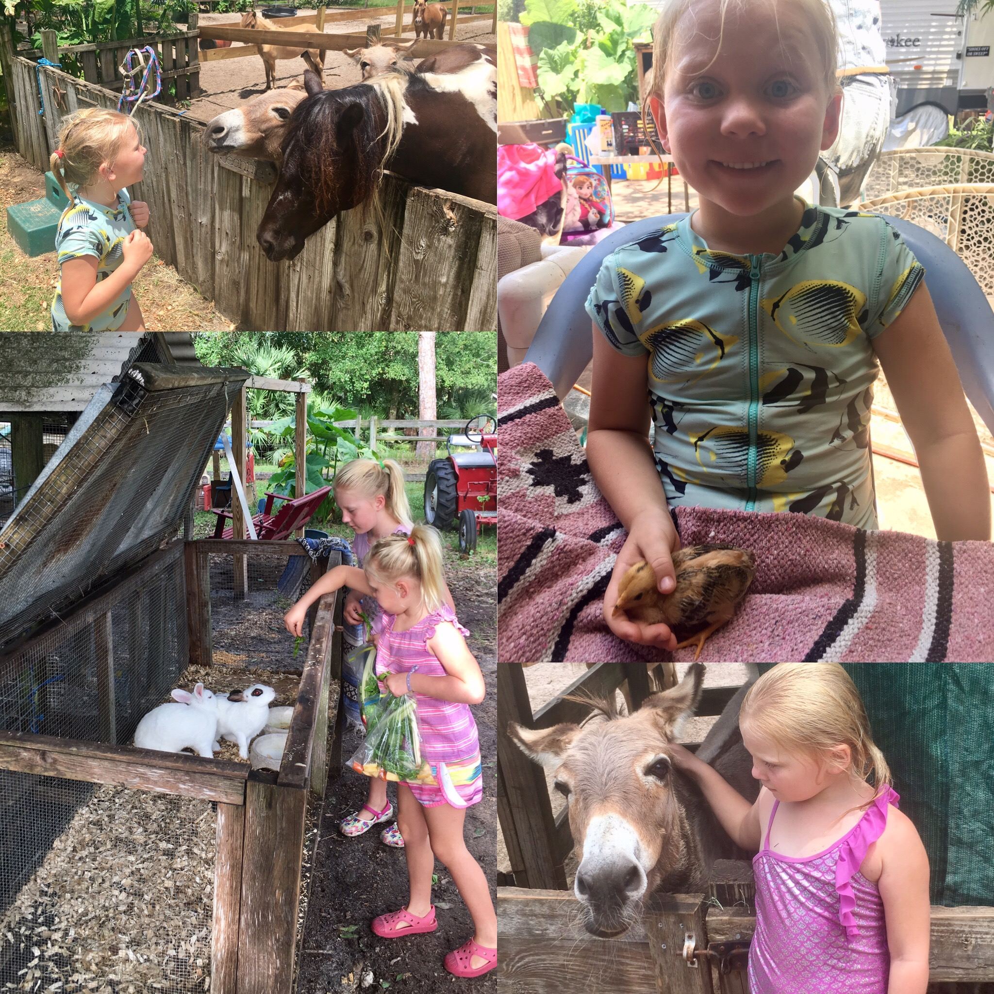 Loey Critter Camp