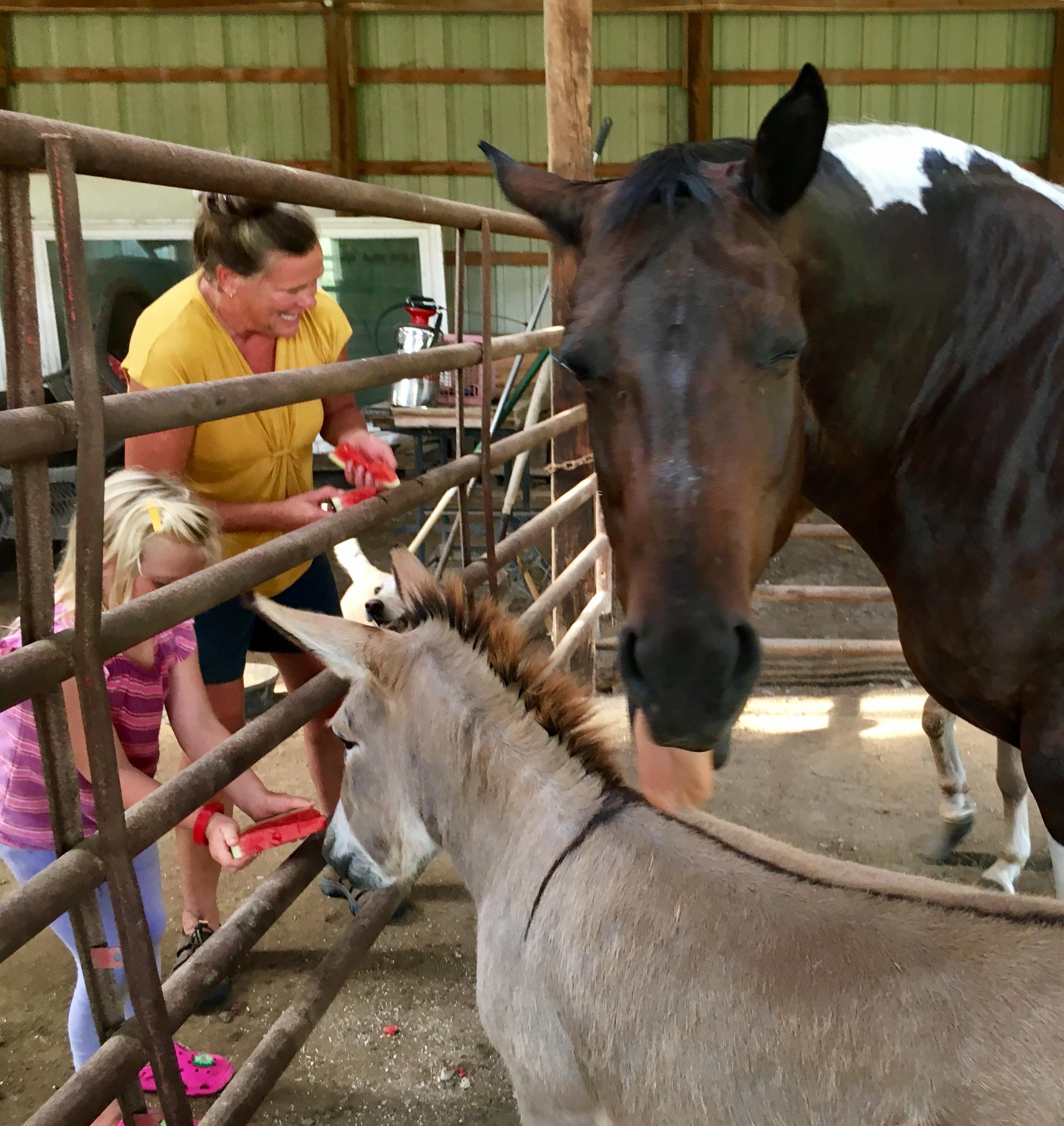 feeding horses with watermellon