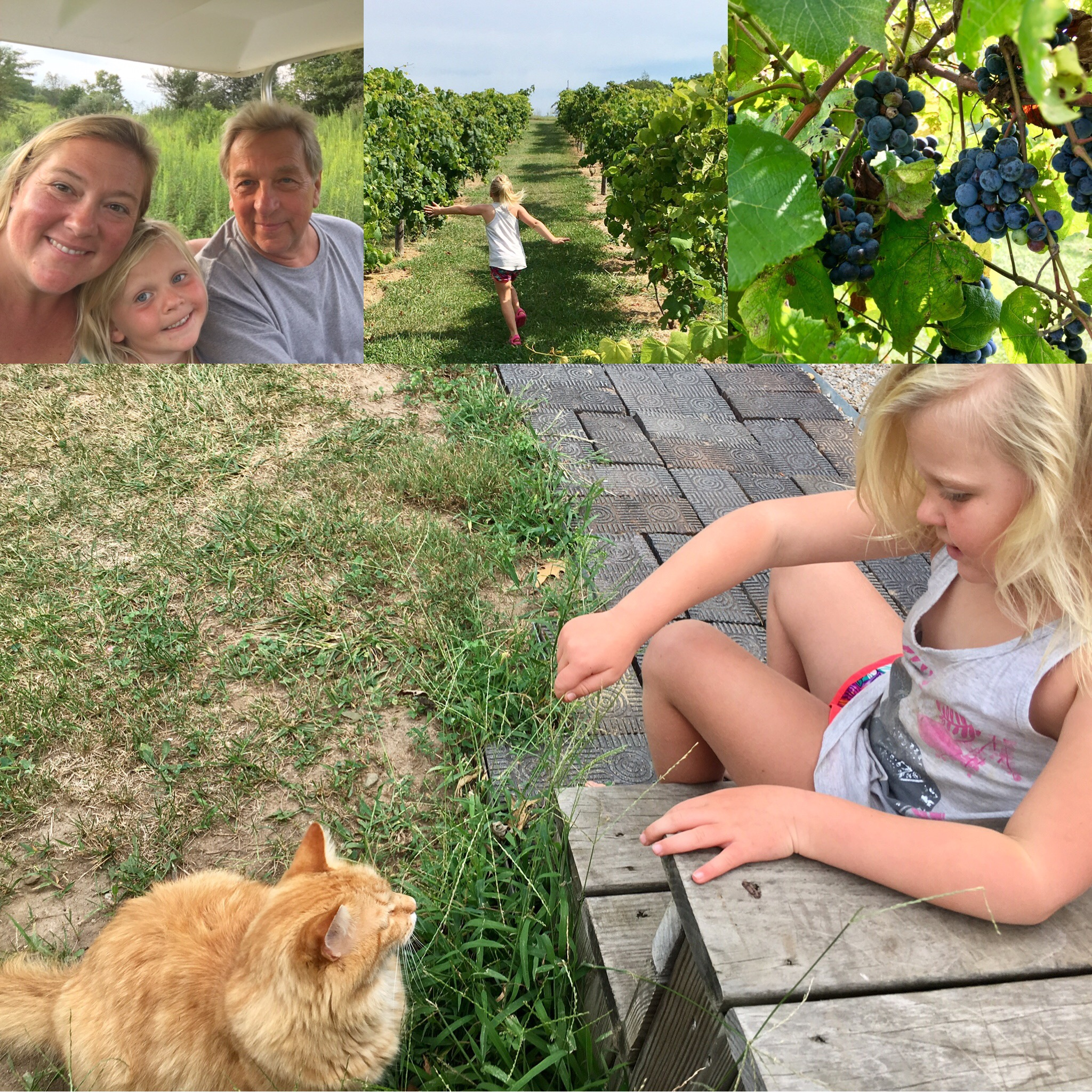 vinyard tour collage