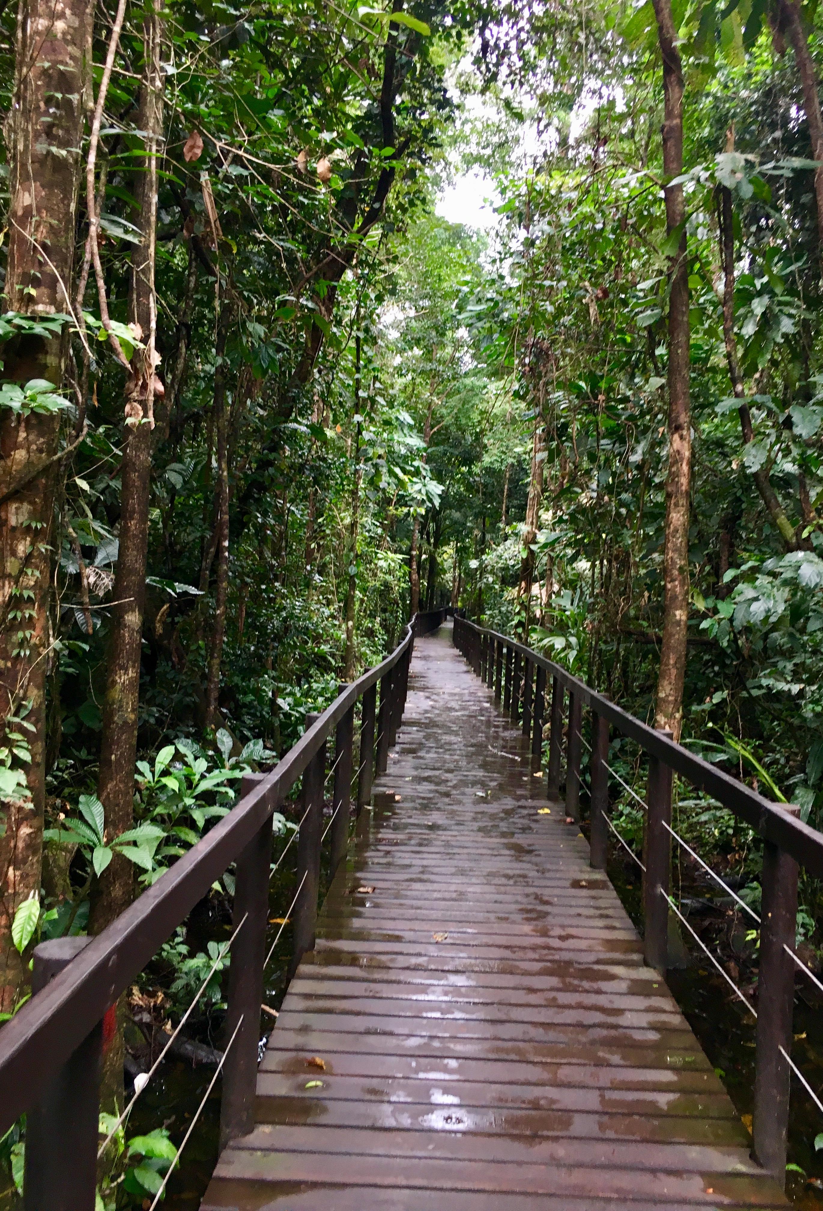 boardwalk through the jungle
