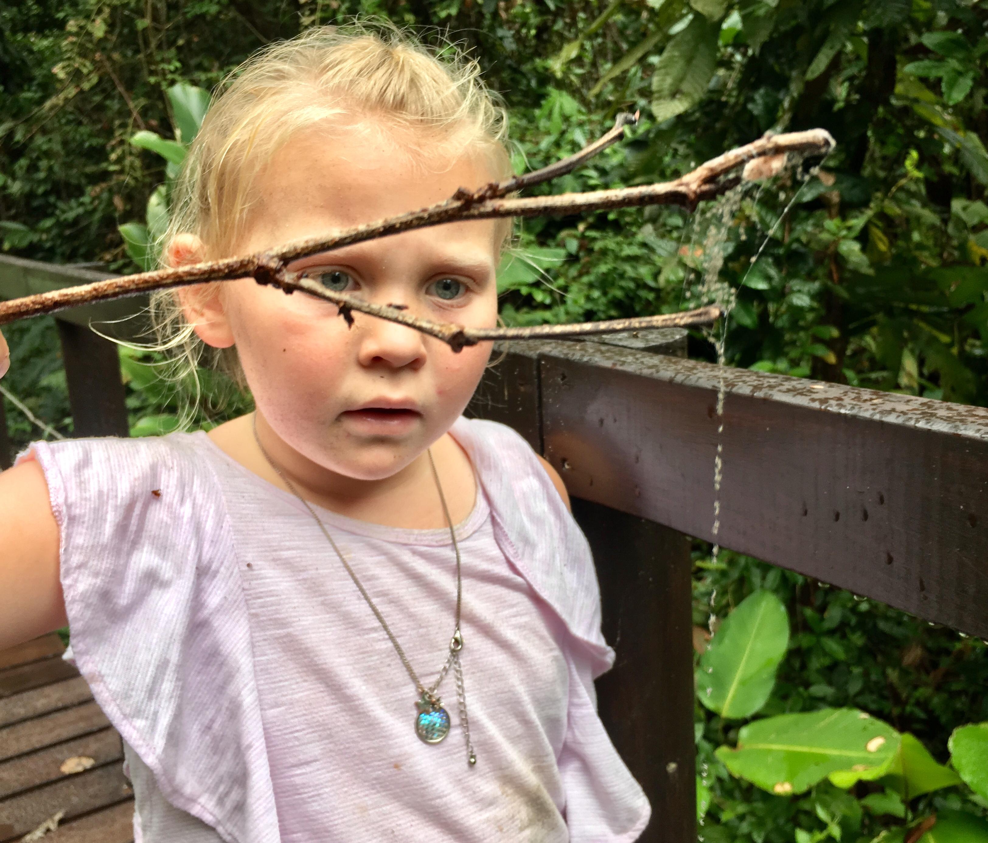 spider string