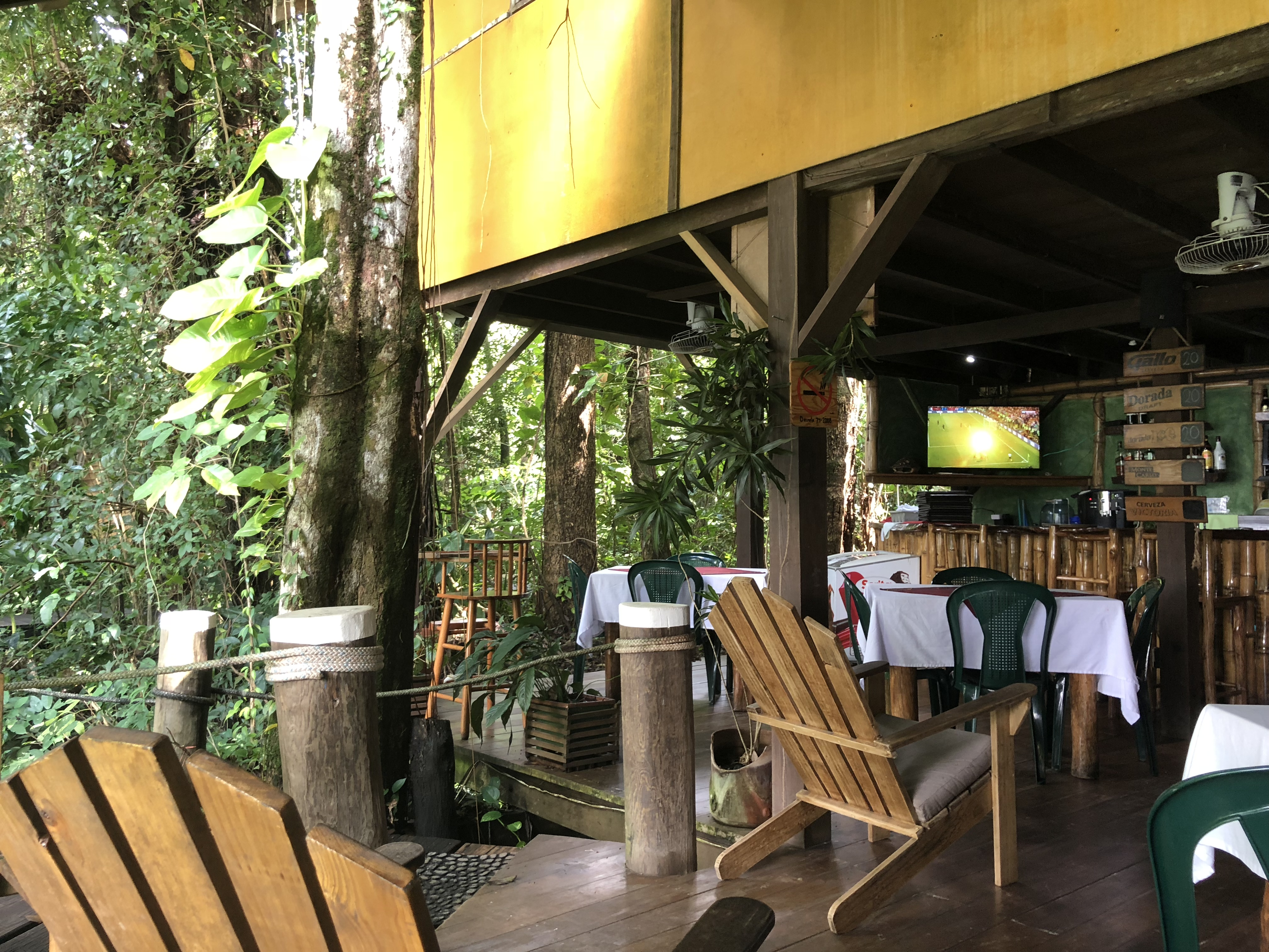 world cup final in the jungle