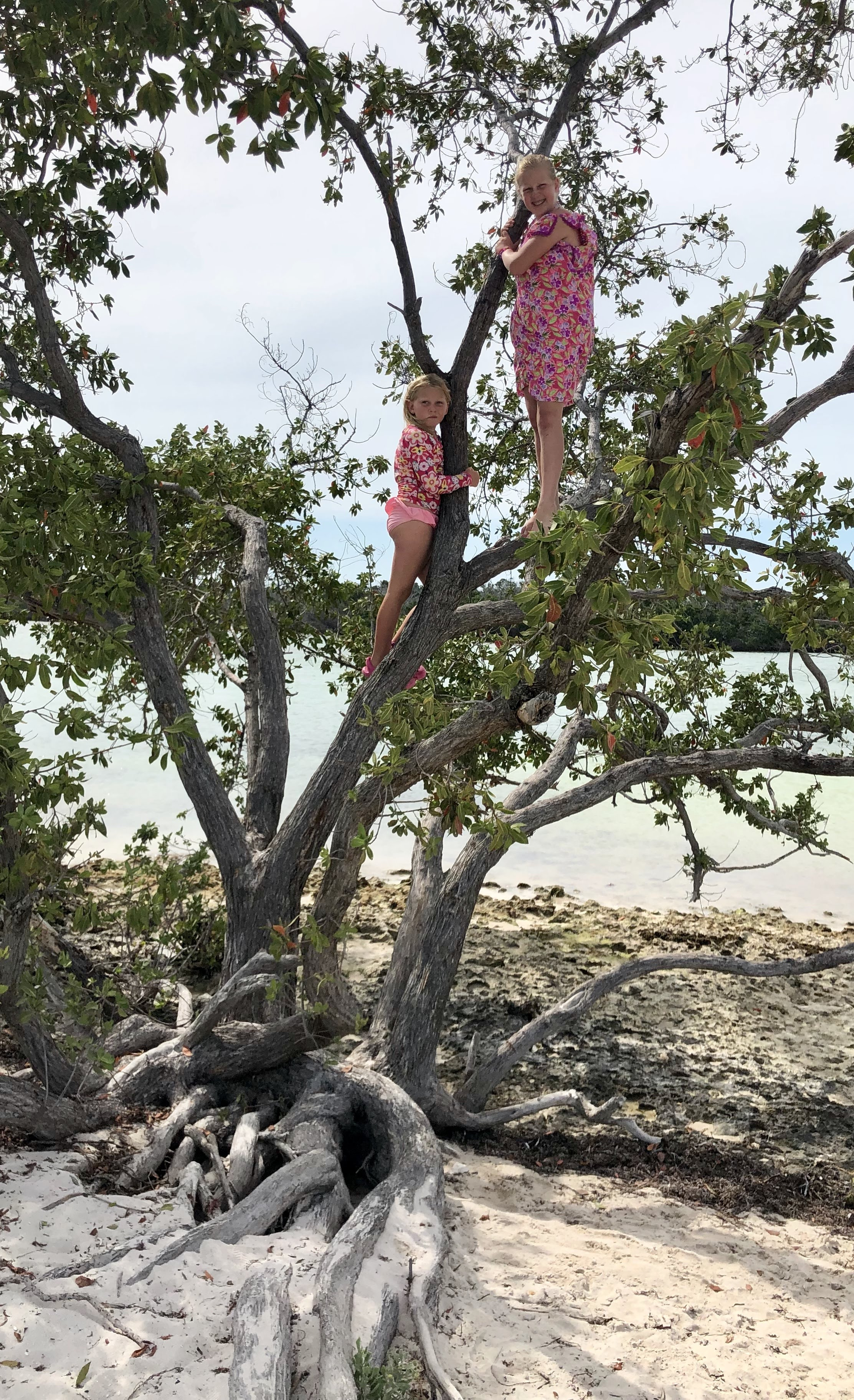 climbing trees at Sombrero Beach