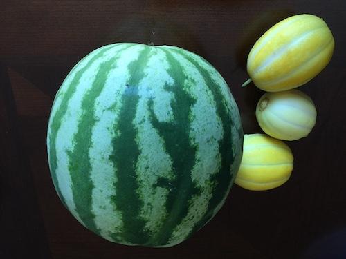 西瓜和香瓜