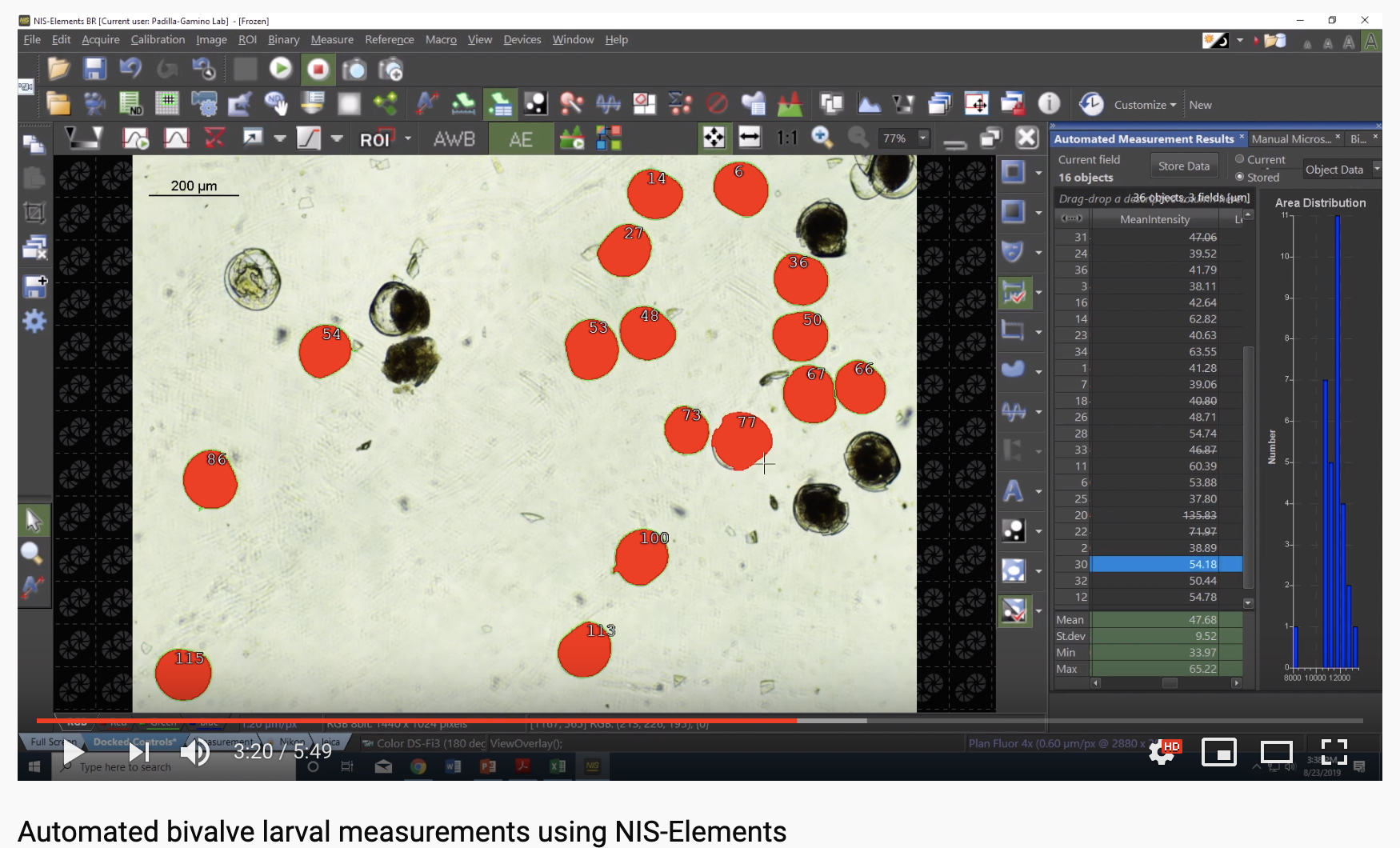 video: automated larval measuring on NIS-Elements