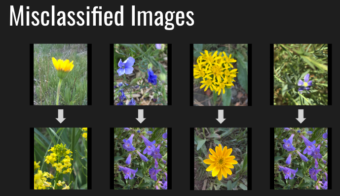 GitHub - jw15/wildflower-finder: Image classification of