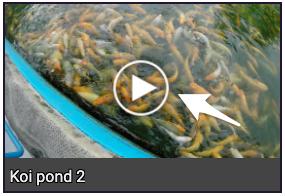 koi-pond-video