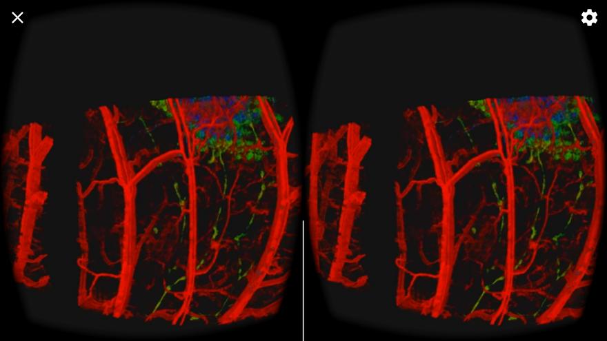 GitHub - orlyliba/virtual-reality-oct: An immersive visualization