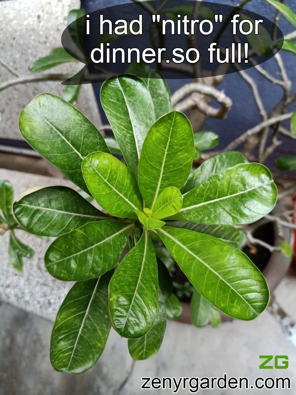 Nitrogen for leaves growth