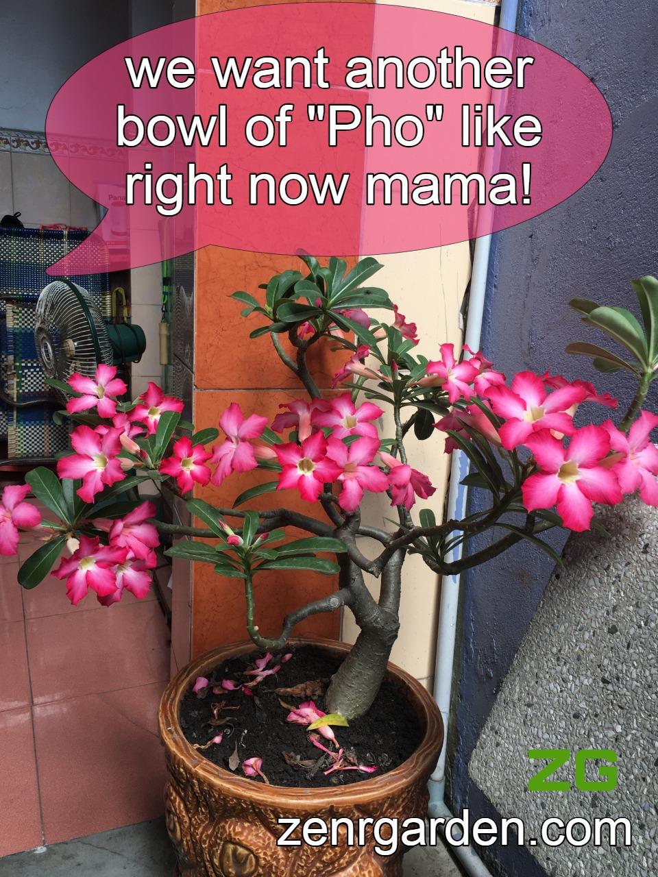 Phosphorous for desert rose