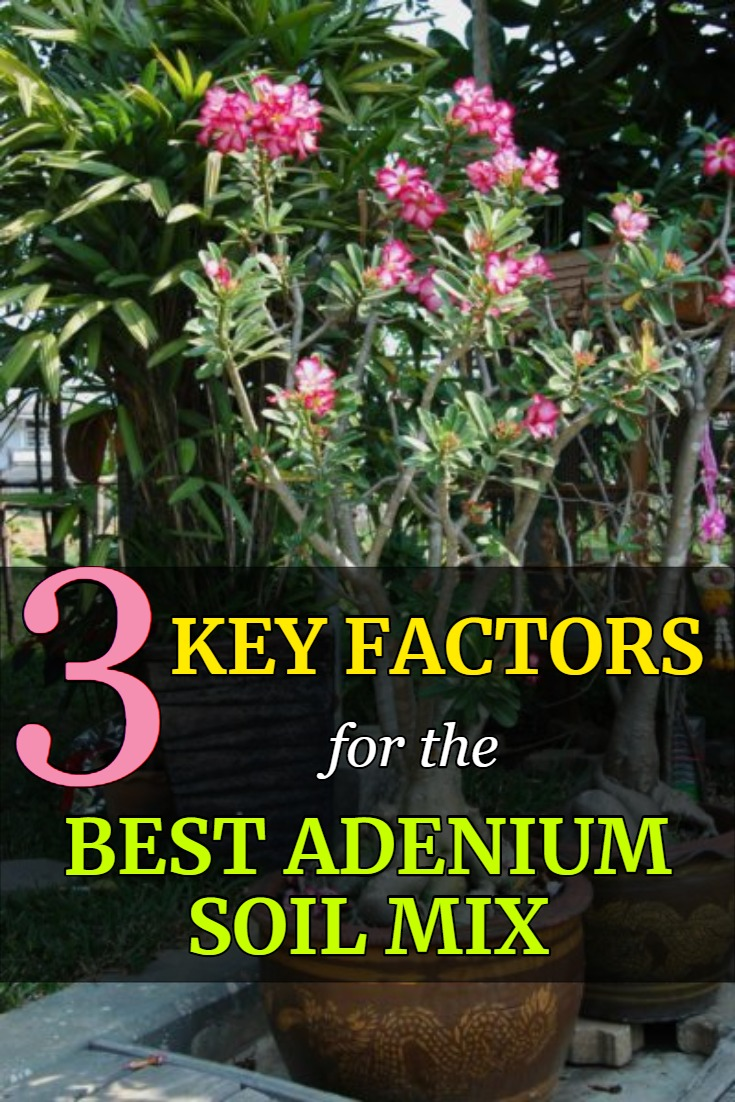 3 key factors for the best adenium soil mix