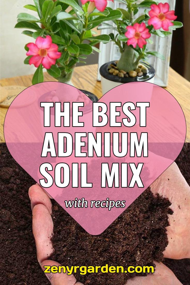 best-adenium-soil-mix
