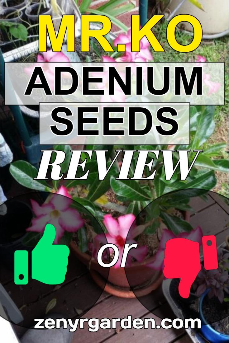 review-of-mr-ko-adenium-seeds