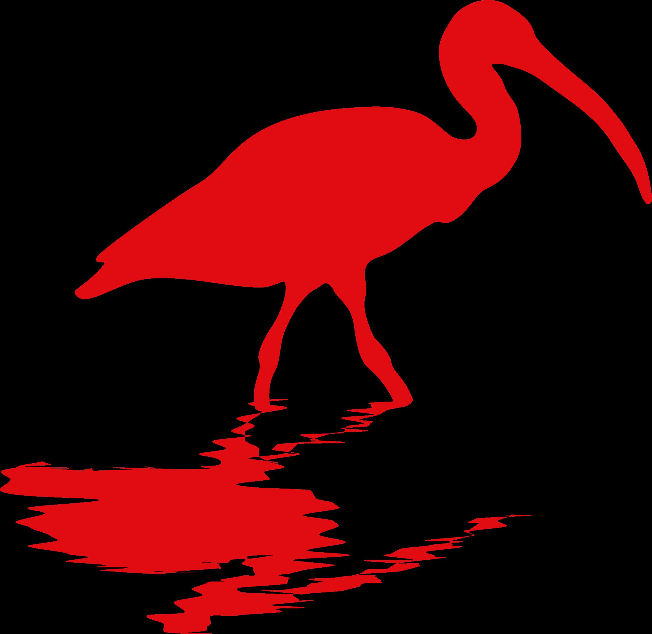 ibis-mikes-birds