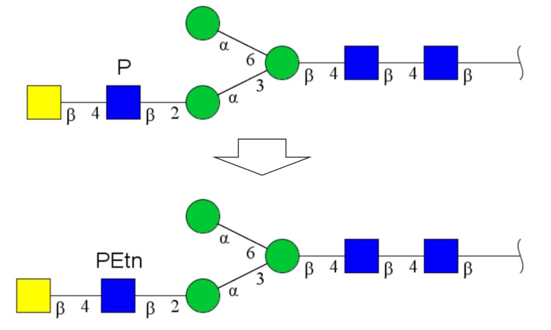 modSubstituent4-1 1