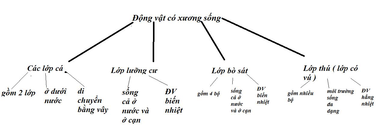 khái niệm về lớp trong hướng đối tượng