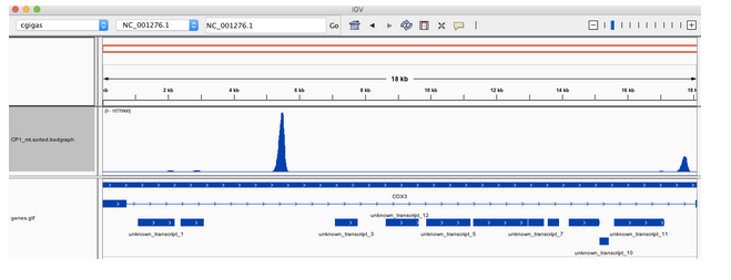 Mac's C.gigas single-cell RNAseq alignment to mt genome in IGV