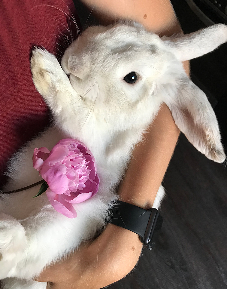 My bunny loves Ethereum