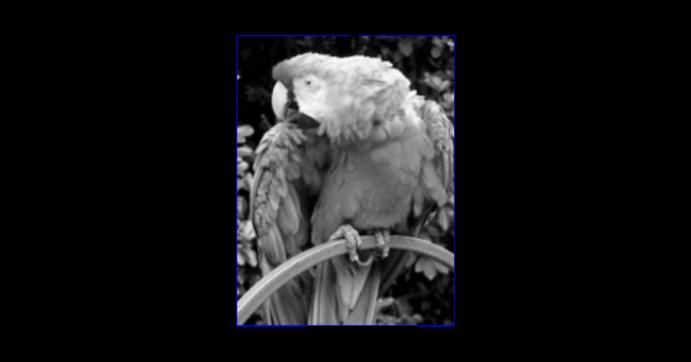 8-bit grayscale monochrome image