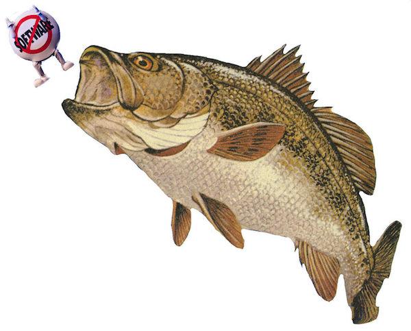 bass: like the fish