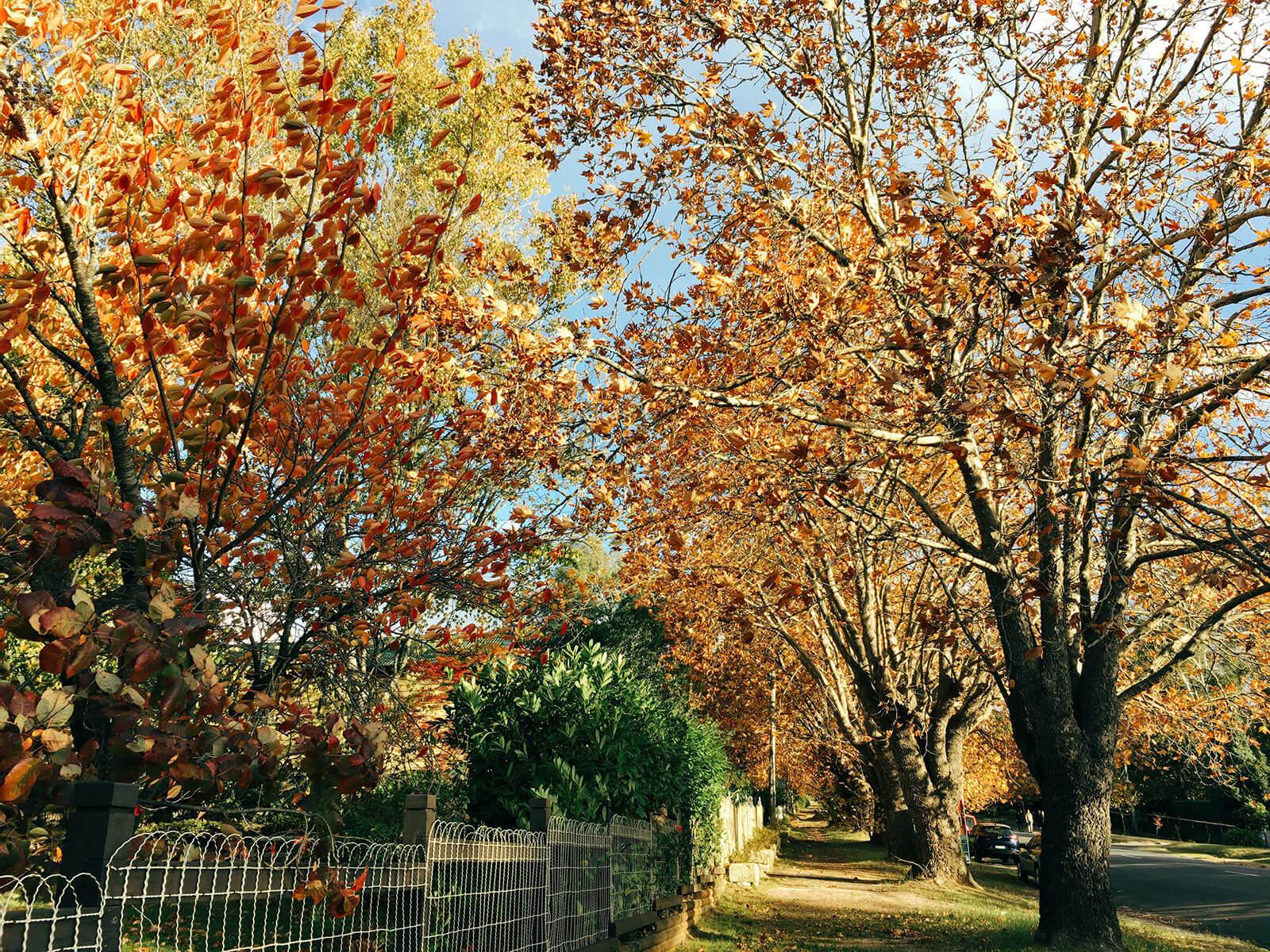 autumn leaves yellow 02