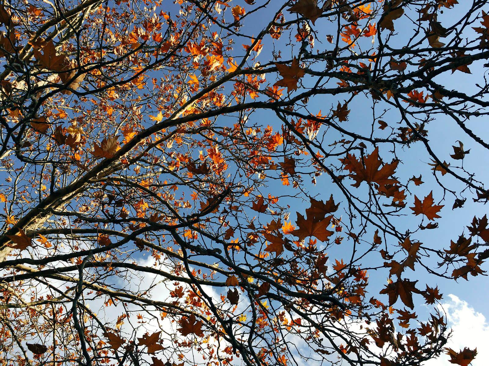 autumn leaves yellow 03