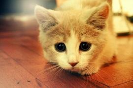 371695,xcitefun-cute-animals-pictures-41