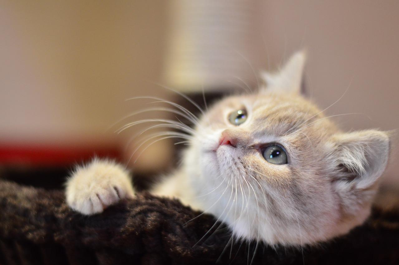 cat-1796843_1280
