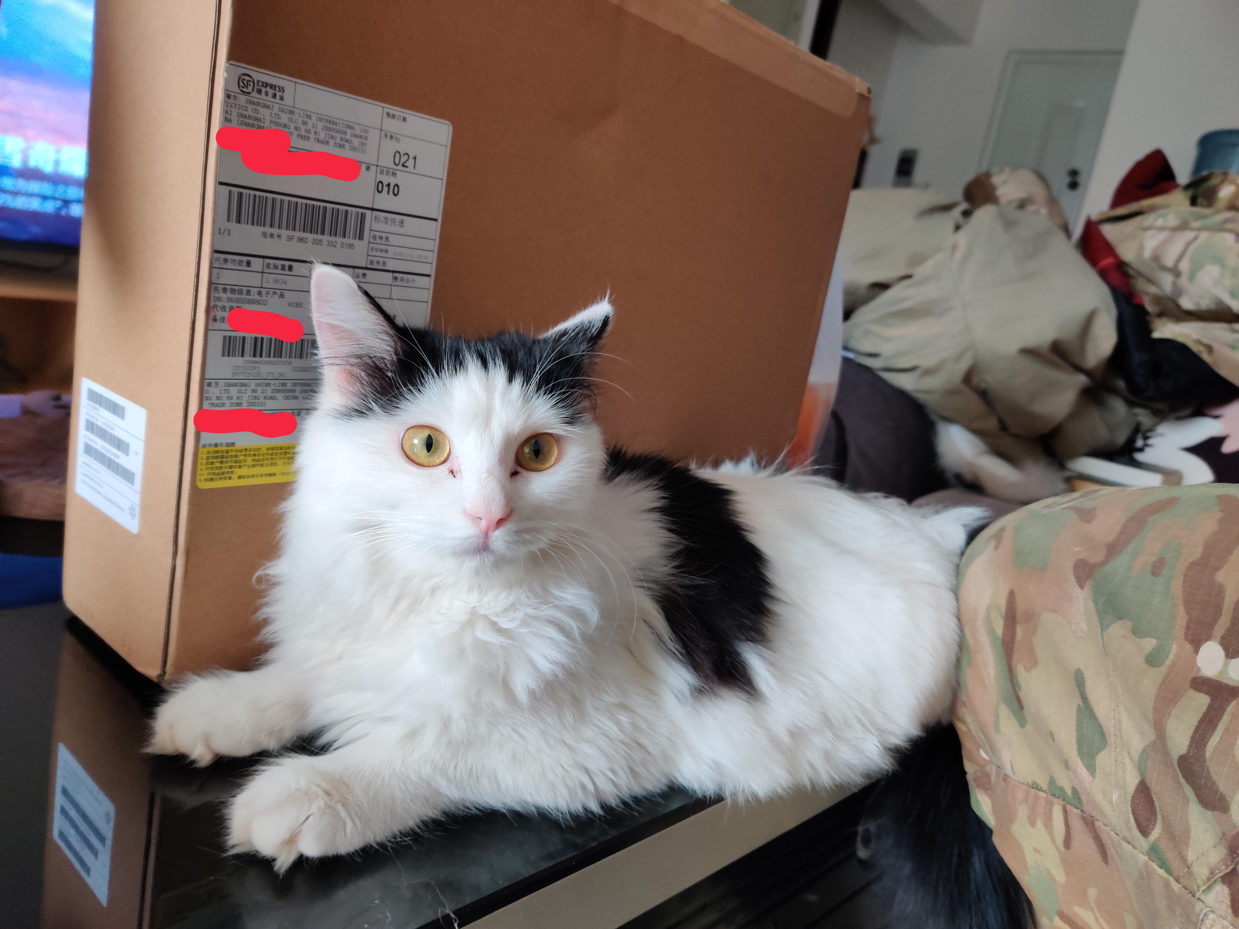 据说献祭一只猫能让电脑用的更久