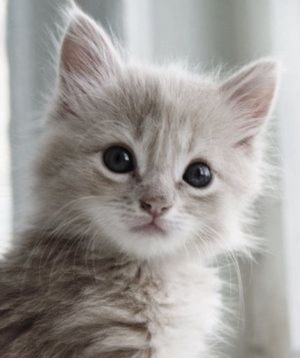 cute-kitten-copy