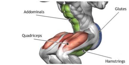 스쿼트에 사용되는 근육