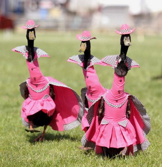 duck-fashion-show-3